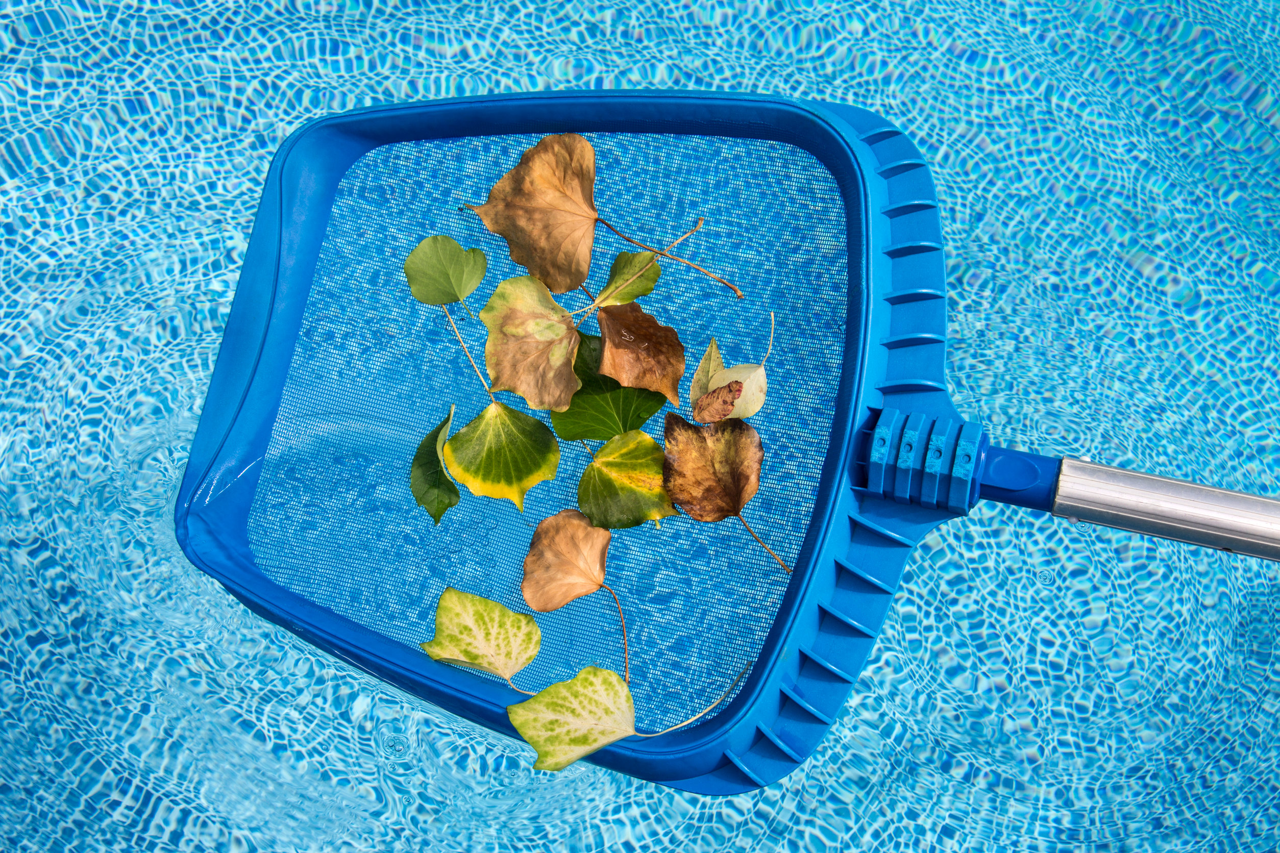 pool leaf skimmer