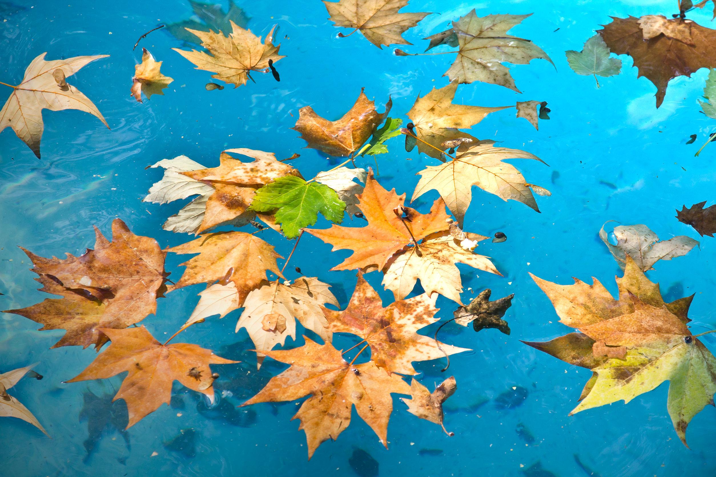swimming pool leaf covers