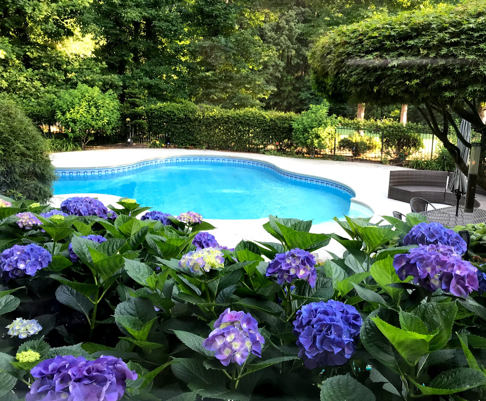 Landscaping Swimming Pools Tips By A Pool Owner